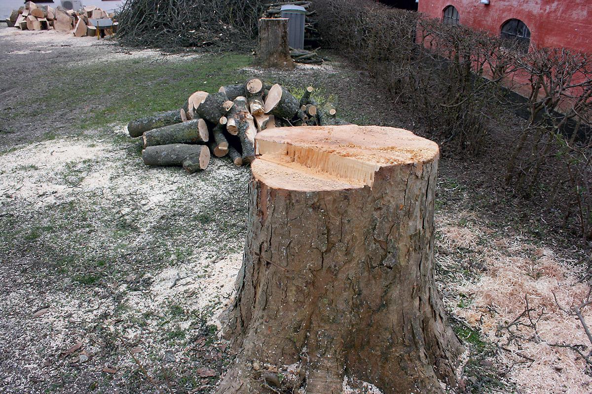 Få 3 tilbud på billig træfældning